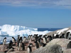 Tour2000, crociere in Antartide fino a Capo Horn