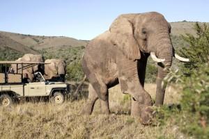 Sudafrica, parte la campagna offerte con 12 tour operator