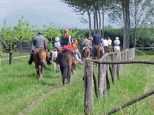 Cavalli_Gruppo