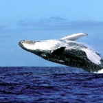 Africando in Sudafrica per il whale watching