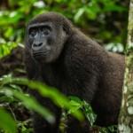Tre itinerari nel bacino del Congo con Africando