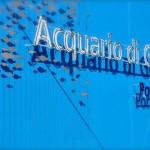Acquario di Genova, visitatori a quota 1 milione e 100 mila