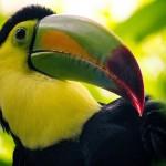 Messico, la nuova campagna punta sulla biodiversità