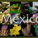 Il Messico ospita il