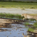 Tour di gruppo in Tanzania con Impronte Wilderness Safari