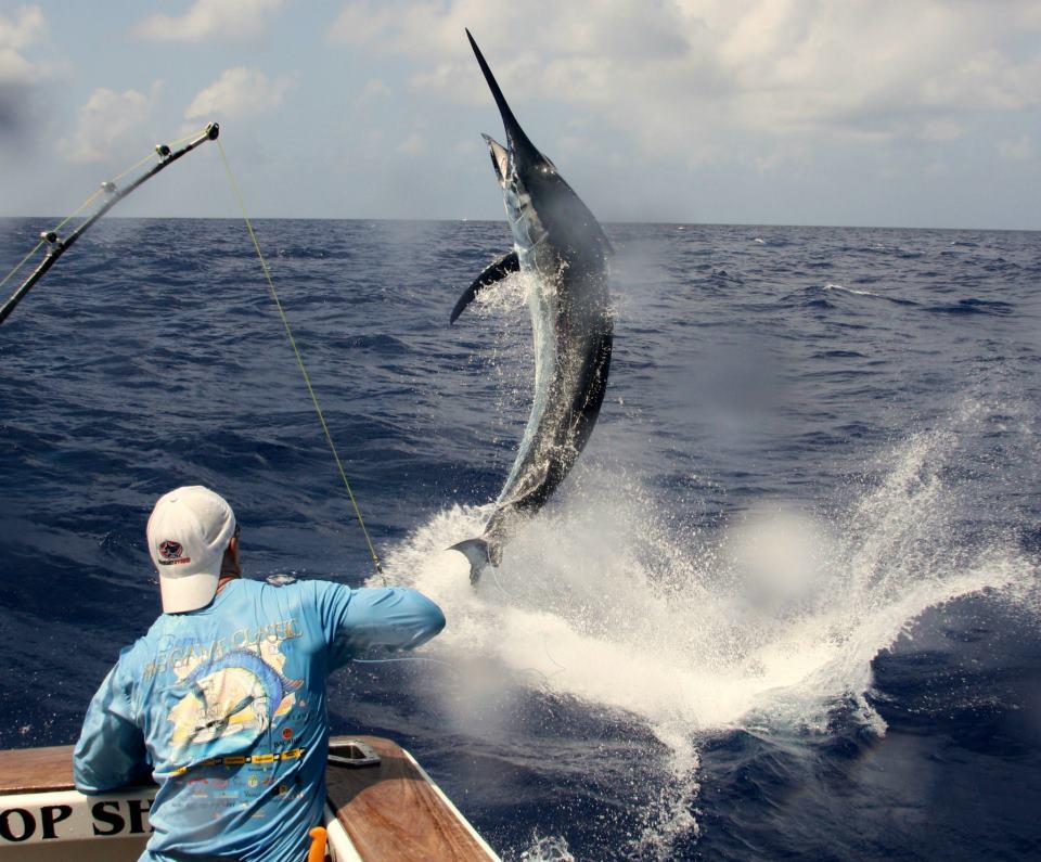 In messico la migliore pesca d 39 altura travelquotidiano for Fish catching games