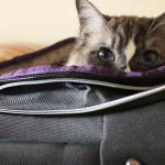 Viaggiare con gatto al seguito, la proposta di Vueling