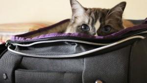 Viaggia con il tuo gatto!