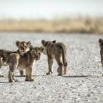 Mappamondo, tour in Sudafrica per famiglie con bambini