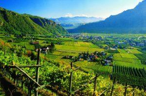 Alto Adige, il vino tra i protagonisti degli eventi in programma