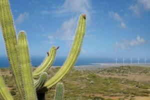 My promise to Aruba: le iniziative per salvaguardare il pianeta e l'isola
