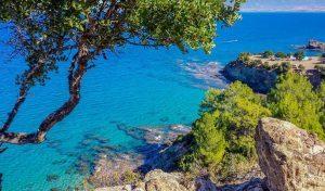 Cipro, prosegue il trend positivo del mercato italiano