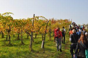 Destinazione Turistica Emilia, eventi e festival nella food valley