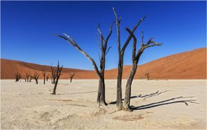KiboTours: un fly&drive in Namibia per scoprire l'essenza dell'Africa