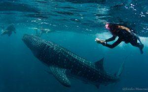 Wwf Travel e il viaggio con gli squali balena