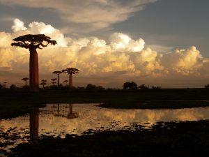Madagascar e Oceano Indiano, tutte le novità firmate Il Diamante