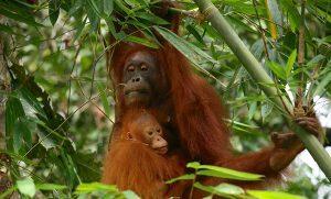 Malesia, alla scoperta del Sarawak tra natura e festival