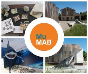 MuMab, un nuovo museo del mare nel parco dello Stirone e del Piacenziano