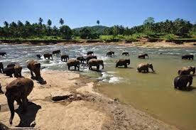 Sri Lanka per famiglie, viaggio KiboTours tra elefanti e balene