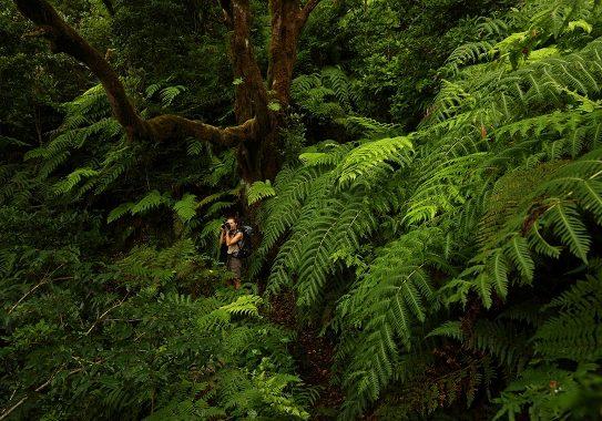 Tenerife: natura allo stato puro! Scopri il nuovo reportage
