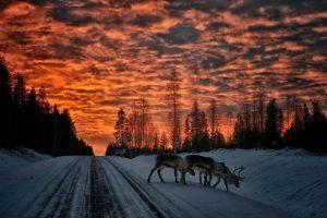 Ponti e feste natalizie nella magia della Lapponia svedese