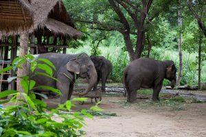 Thailandia, focus su conservazione e cura degli animali