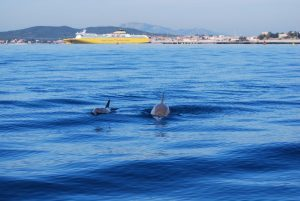 Corsica Ferries e Worldrise: censire i delfini per sensibilizzare i passeggeri