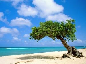 Aruba, programma di certificazione di pulizia e igiene per garantire i visitatori