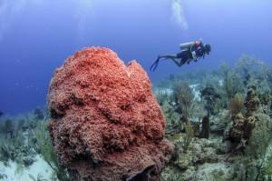 Il Belize di Vuela, alla scoperta del paese tra mare e storia