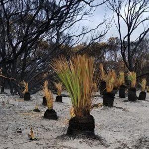 L'Australia del dopo-incendi: «Pronti ad accogliere i turisti»
