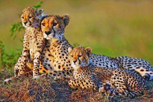 Il Diamante: in arrivo il Mdluli Glamping Kruger Park
