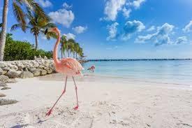 Aruba promuove viaggi di nozze e lusso, fam trip a novembre