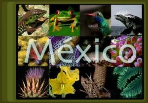 """Il Messico ospita il """"Convegno sulla biodiversità"""""""