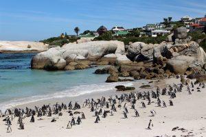African Explorer, cinque tour per un Capodanno in Sudafrica