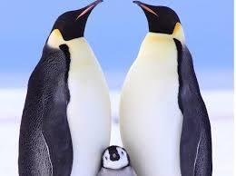 L'Antartide di Tucano Viaggi nel nuovo numero del Giornale del Viaggiatore