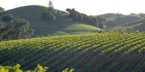Sonoma county: sostenibilità ambiente, ospitalità, consapevolezza, tutto intorno al vino