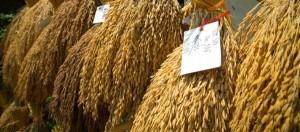 Thailandia, fiera della tradizione agricola a Bangkok