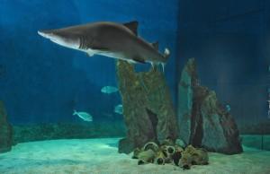 Genova, l'Acquario inaugura la mostra Paleoaquarium: il mare al tempo dei dinosauri