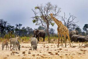 Imvelo Safari Lodges, al Tove con  i soggiorni top e le attività personalizzate