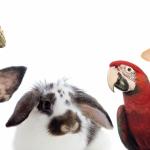 Cervia e Milano Marittima: due località balneari amiche degli animali
