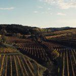 PromoTurismoFVG, sei video sulla Strada del vino