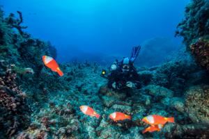 Malta, immersioni in sicurezza con la professional Diving Schools Association