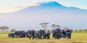 Kenya Tourism Board si affida a PR & Go Up per la rappresentanza in Italia