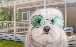 Baia Holiday: ecco la formula Coco per vacanze pet-friendly