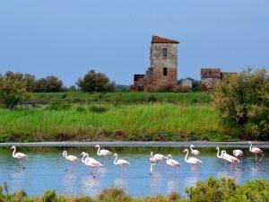 Parco Delta del Po, insieme agli operatori turistici per ospitare incontri di educazione ambientale