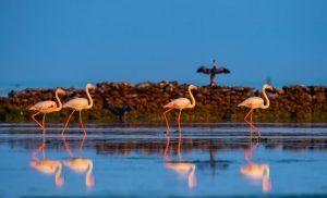 Qatar National Vision 2030, il paese rafforza le misure per proteggere l'ambiente e le specie