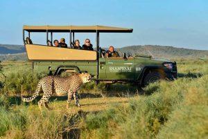 TiEsBi accompagna le adv in safari virtuali in Sud Africa per prepararsi alla ripartenza
